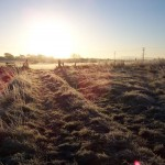 Rights of way and countryside sites - sunrise