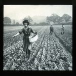 Lantern slide of a young Women's Land Army girl sowing, c1918, (R/L/39/2/19), East Sussex Record Office