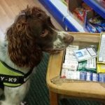 A tobacco detection dog at work